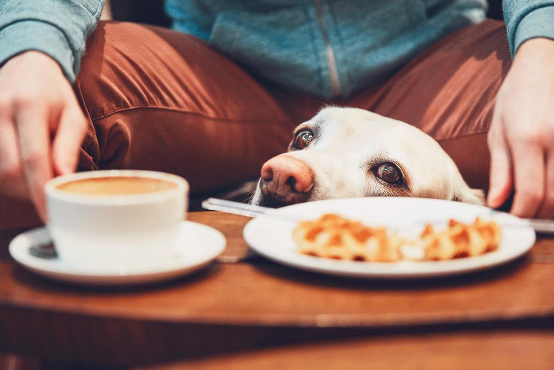Koira-ravintola-uusivuosi-Eerikkilä